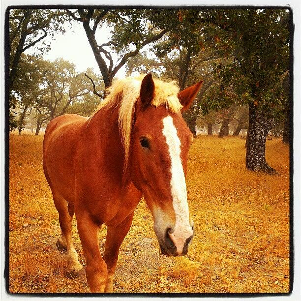 Brown Photograph - Hello Horse by CML Brown