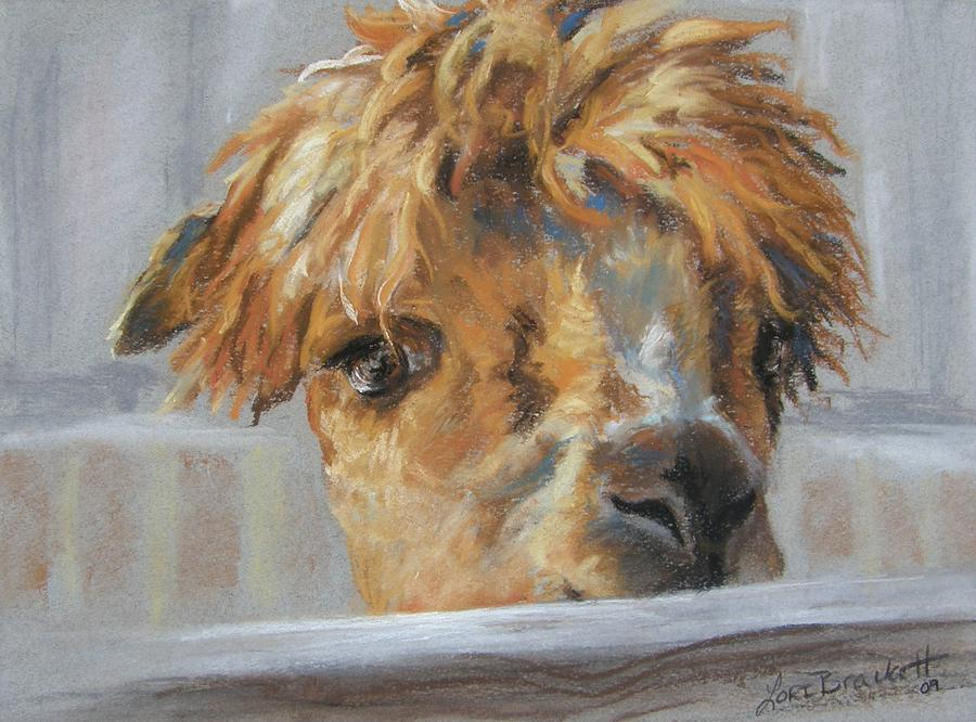 Animal Drawing - Hello by Lori Brackett