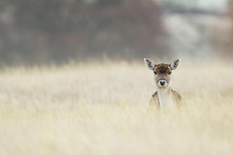 Hello Photograph by Markbridger