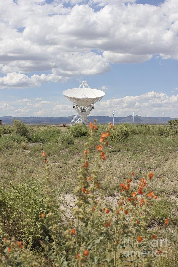 Vla Photograph - Hello?  by Stephanie Woerndle
