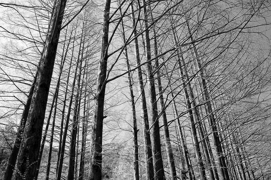 Landscape Photograph - Hello Trees by Phoresto Kim