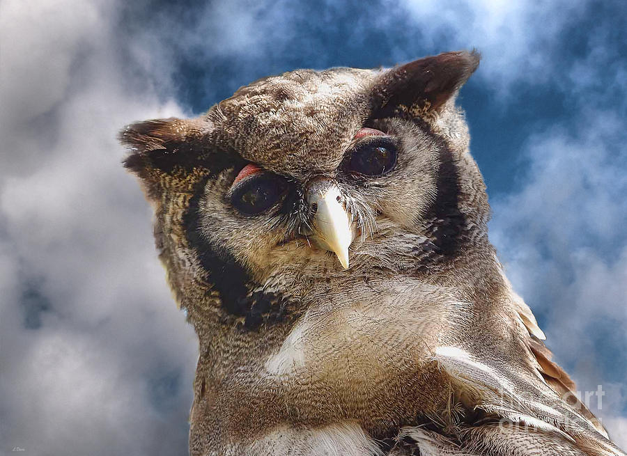 Owl Photograph - Hello You Down There by Wobblymol Davis