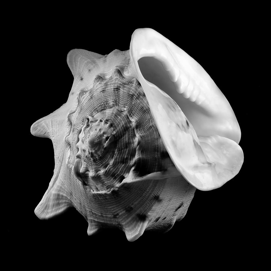 Black And White Photograph - Helmet Shell by Jim Hughes
