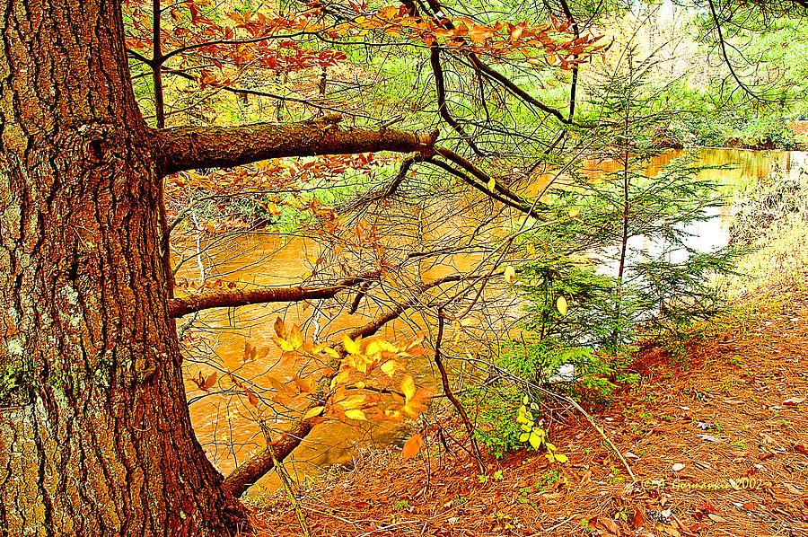 Hemlock And Beech Trees In Autumn Digital Art Photograph