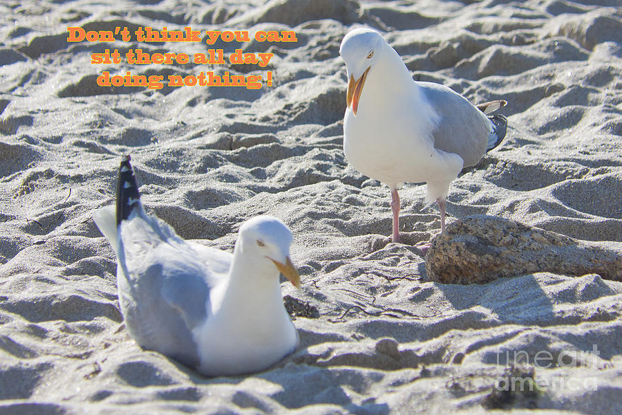 Hen Pecked Photograph