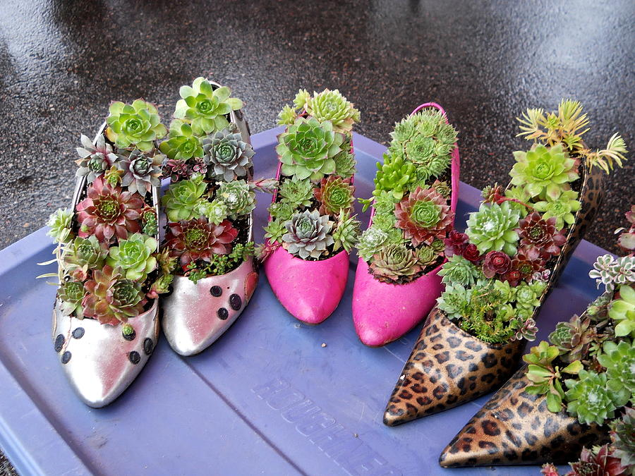 Hens and Chicks in Shoes by Kent Lorentzen