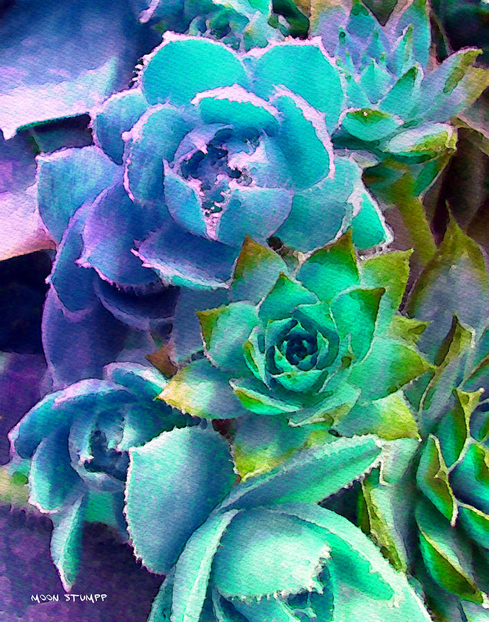 Hens And Chicks Photography Photograph - Hens And Chicks Series - Deck Blues by Moon Stumpp