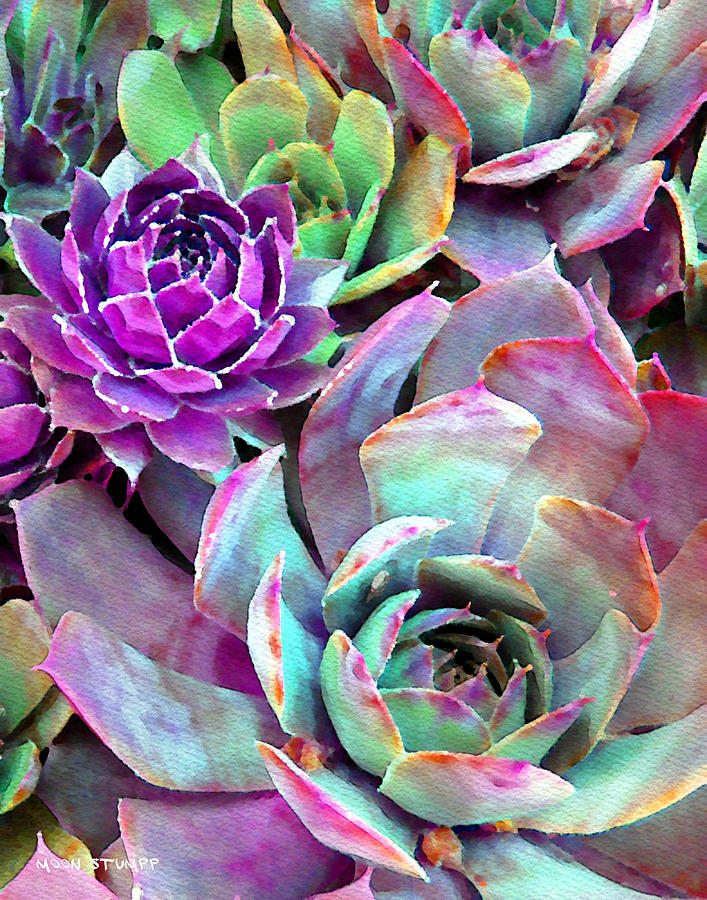 Cactus Photograph - Hens And Chicks Series - Urban Rose by Moon Stumpp