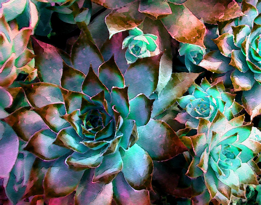 Cactus Photograph - Hens And Chicks Series - Verdigris by Moon Stumpp