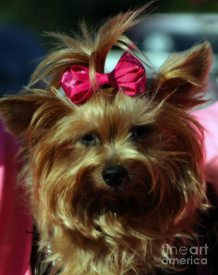 Dogs Photograph - Her Pinkness by Steven  Digman