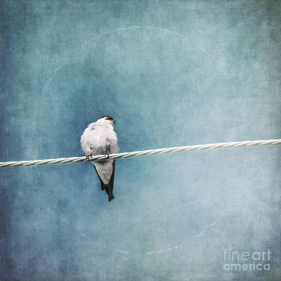 Swallow Photograph - Herald Of Spring by Priska Wettstein