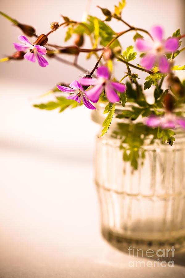 Wildflowers Photograph - Herb Robert Posy by Jan Bickerton