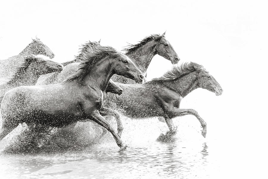 Herd of Wild Horses Running in Water Photograph by Tunart