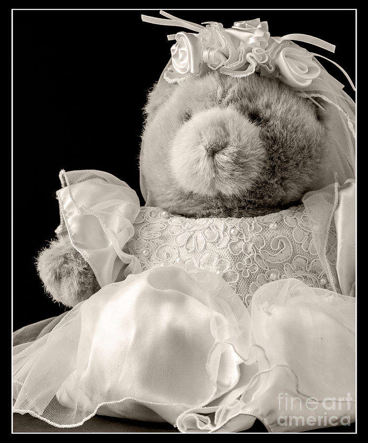 Teddy Bear Photograph - Here Comes The Bride by Edward Fielding