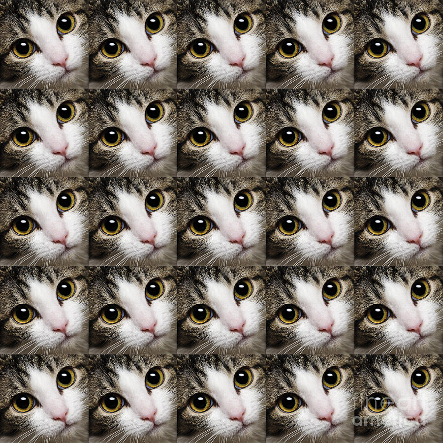 Andee Design Cat Photograph - Here Kitty Kitty Close Up 25 by Andee Design