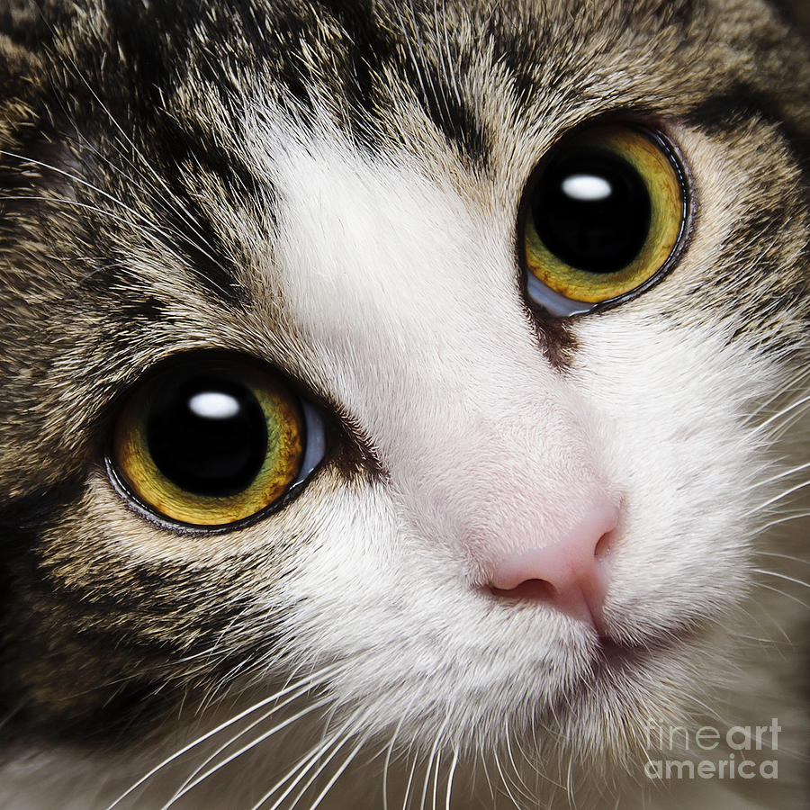 Andee Design Photograph - Here Kitty Kitty Close Up by Andee Design