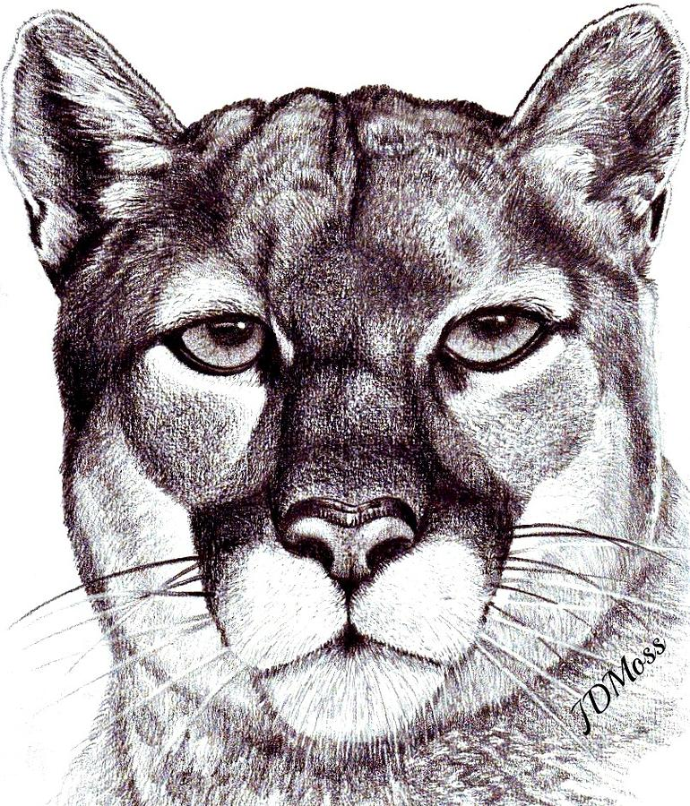 Animals Drawing - Here Kitty Kitty by Janet Moss
