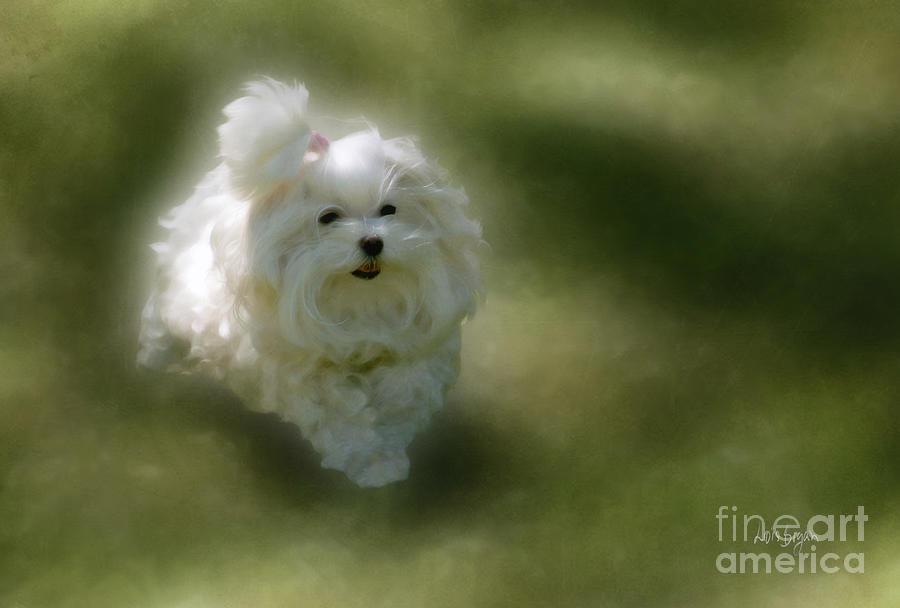 Dogs Photograph - Here She Comes by Lois Bryan