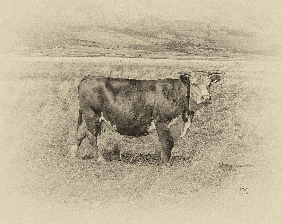Hereford Matriarch by David W Schafer