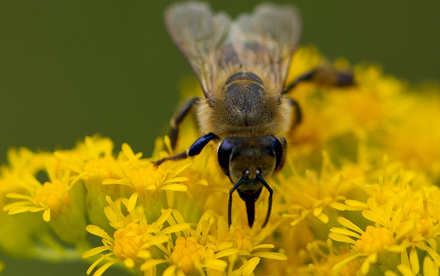 Bee Photograph - Heres Looking At You Honey by John Hoey