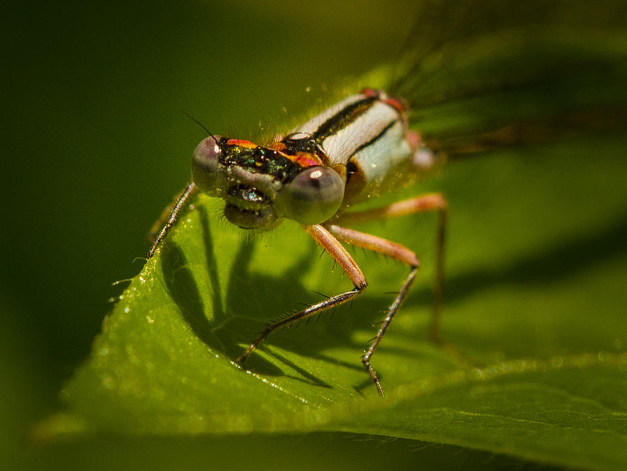 Insect Photograph - Heres Looking At You by Jean Noren