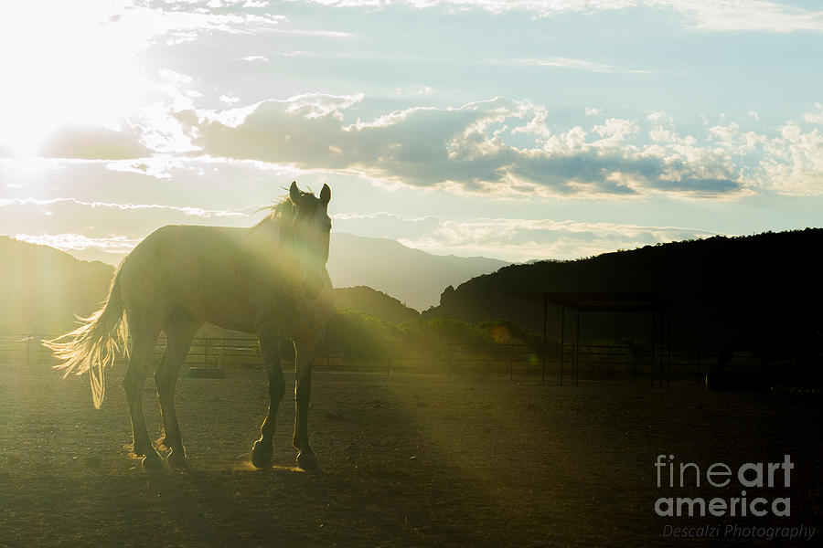 Morning Photograph - Hermosa Luz by Patty Descalzi