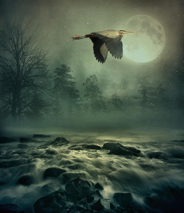 Heron Photograph - Heron By Moonlight by Andrea Kollo