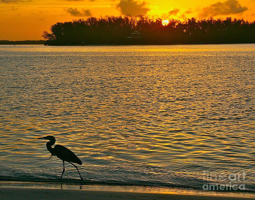 Heron Hunting at Sunrise by Joan McArthur