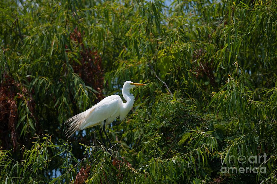 Heron In Tree Photograph
