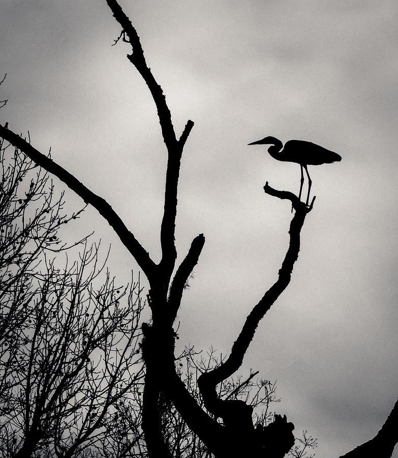 Heron On The Tree Photograph