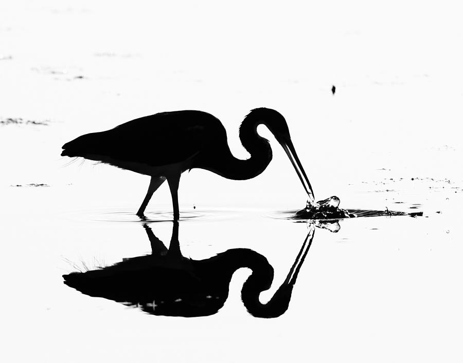 Hunter Photograph - Heron Silhouette by Brian Magnier