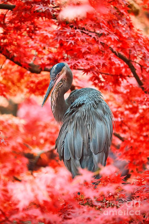 Herons Photograph - Heron Wonderland by Douglas Barnard