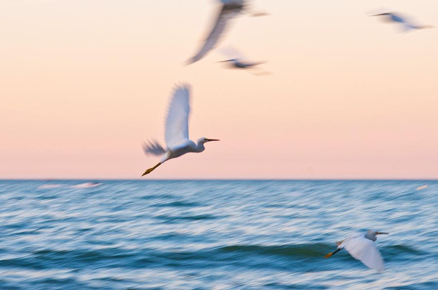 Beach Photograph - Herons Flying Over The Sea  by Jose Maciel