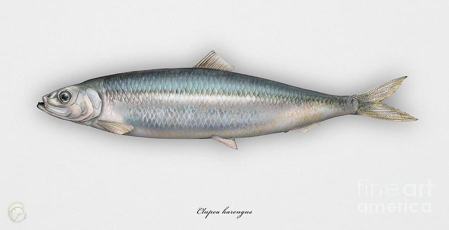 Seafood Painting Sales