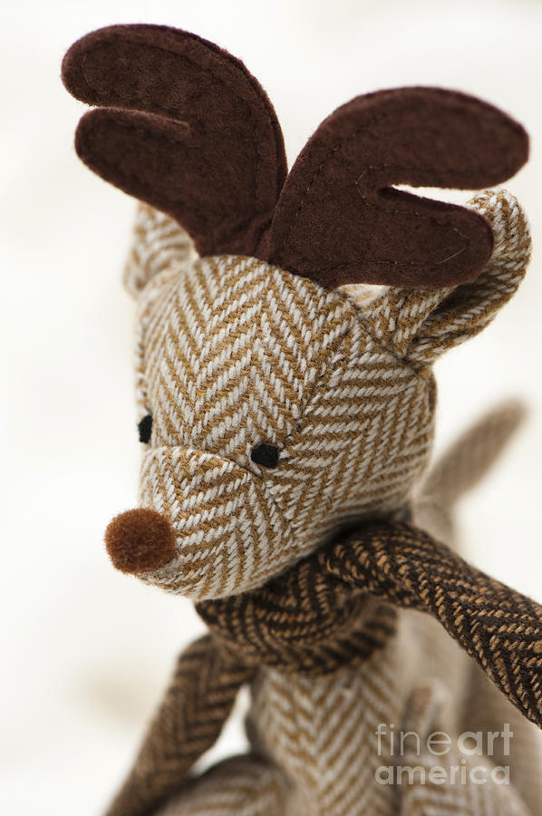 Anne Photograph - Herringbone Reindeer by Anne Gilbert