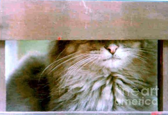 Cat Photograph - Hey Diddle Diddle by Michael Hoard