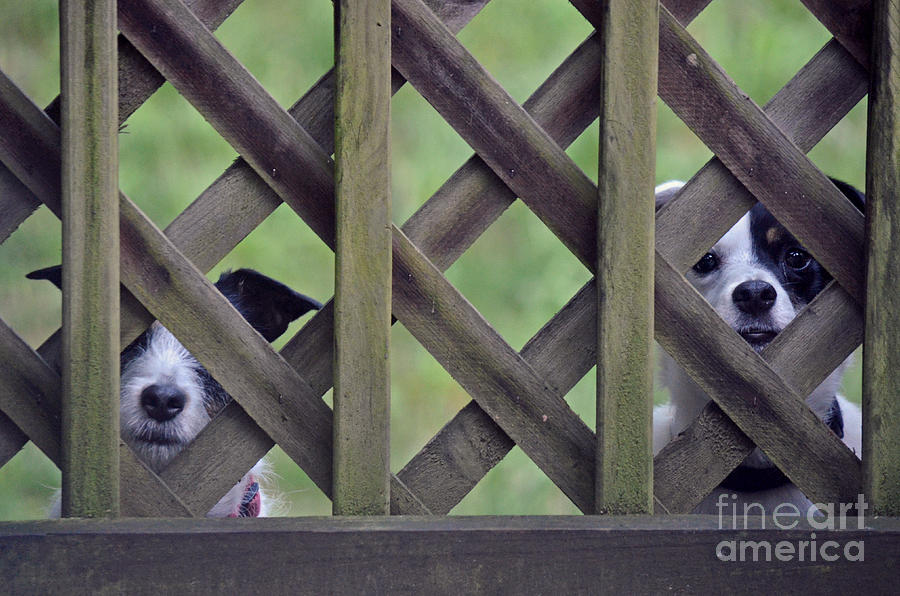 Dog Photograph - Hey... I Cant See by David G Nichols