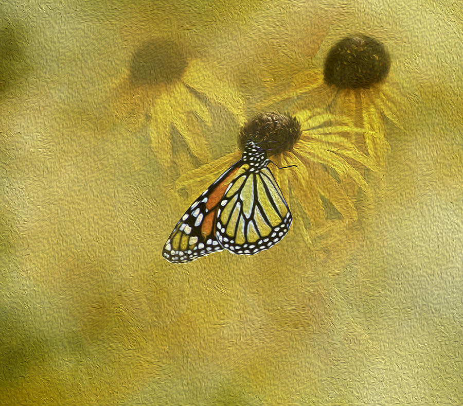Susans Photograph - Hey Susan There Is That Butterfly Again by Diane Schuster