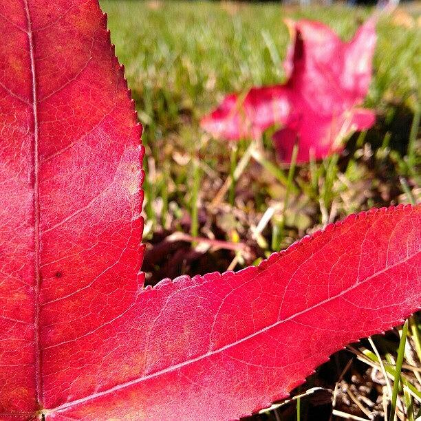 Red Photograph - Hi. Wanna Play? by CML Brown