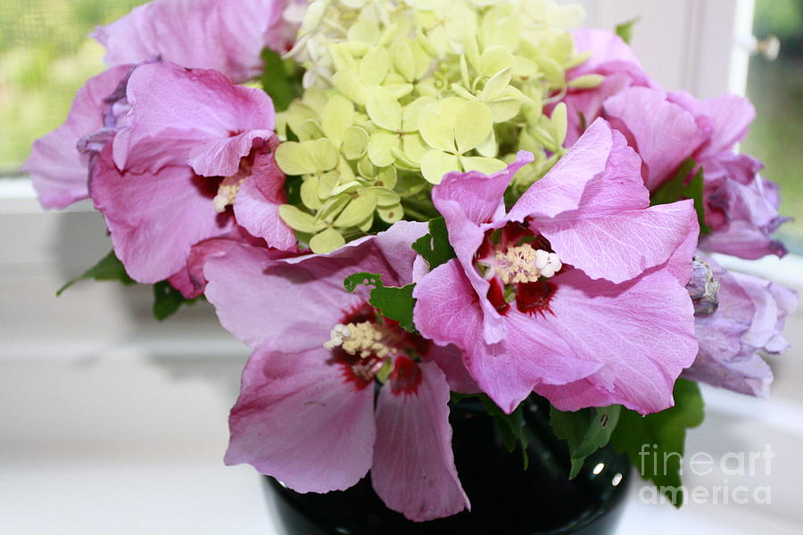 Greeting Card Photograph - Pink Hibiscu And Hydrangea Flower #2 by Arelys Jimenez