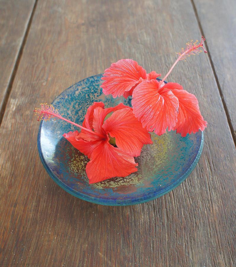 Hibiscus Photograph - Hibiscus #4 by Chikako Hashimoto Lichnowsky