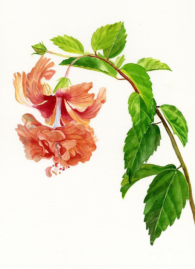 Hibiscus Painting - Hibiscus El Capitolio Sport by Sharon Freeman