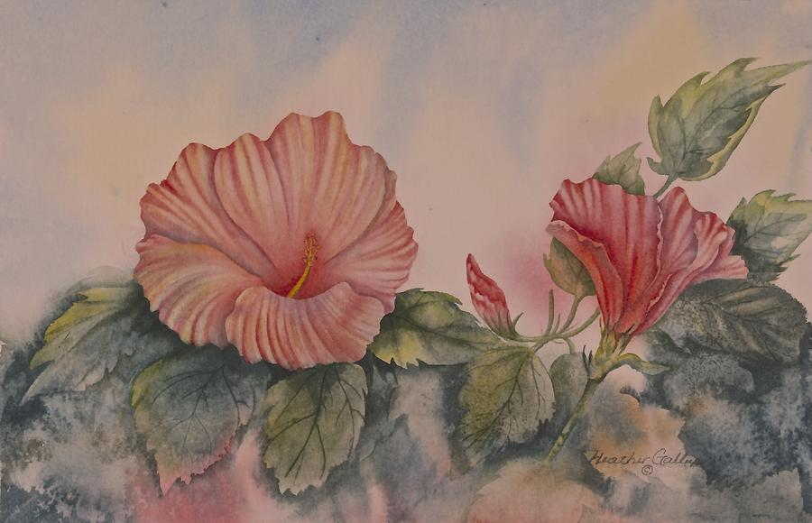 Hibiscus Painting - Hibiscus by Heather Gallup