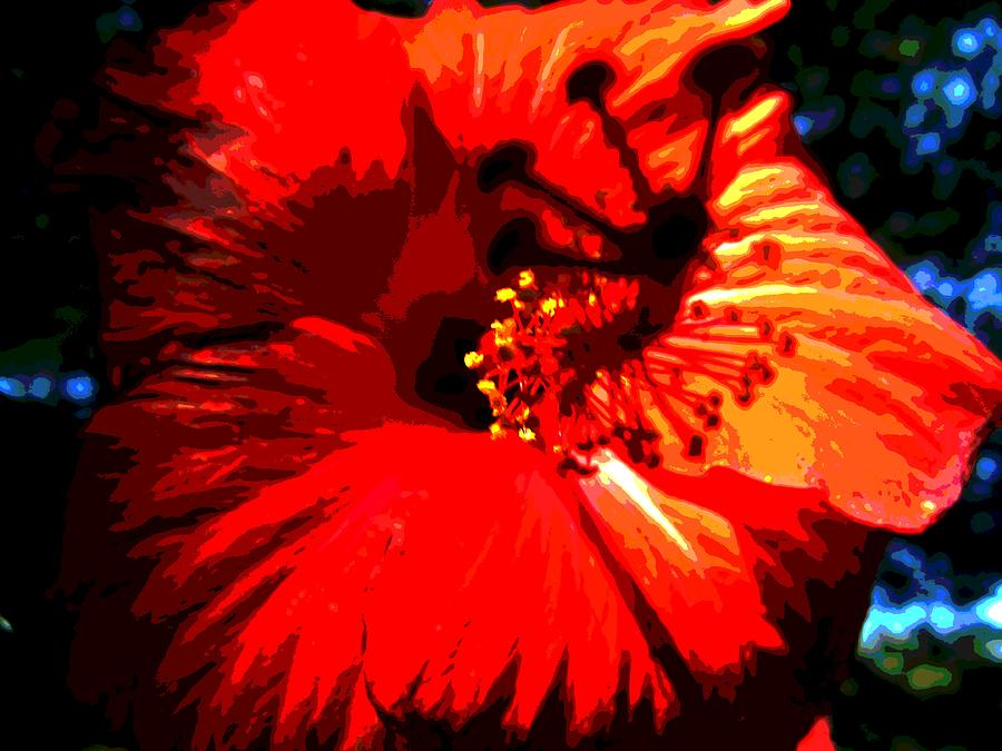 Hibiscus Photograph - Hibiscus by Mark Malitz