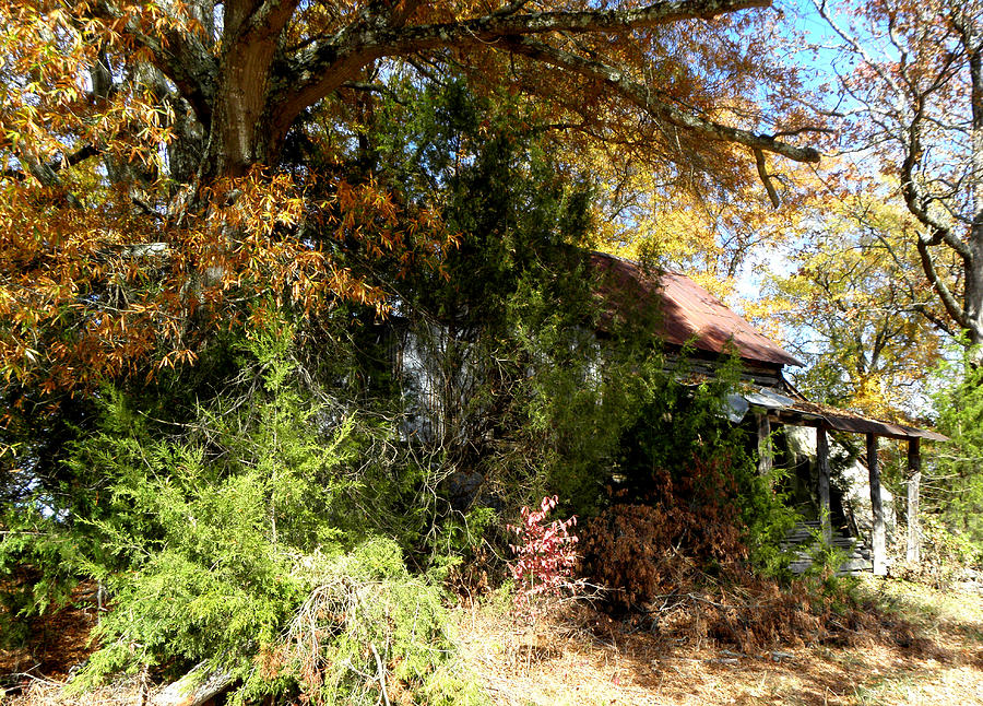 Foliage Photograph - Hidden And Forgotten  by Kim Galluzzo Wozniak