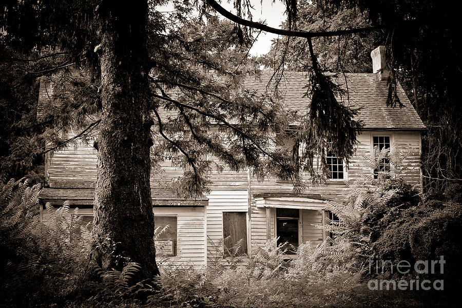 Abandoned Photograph - Hidden Behind The Pines by Colleen Kammerer