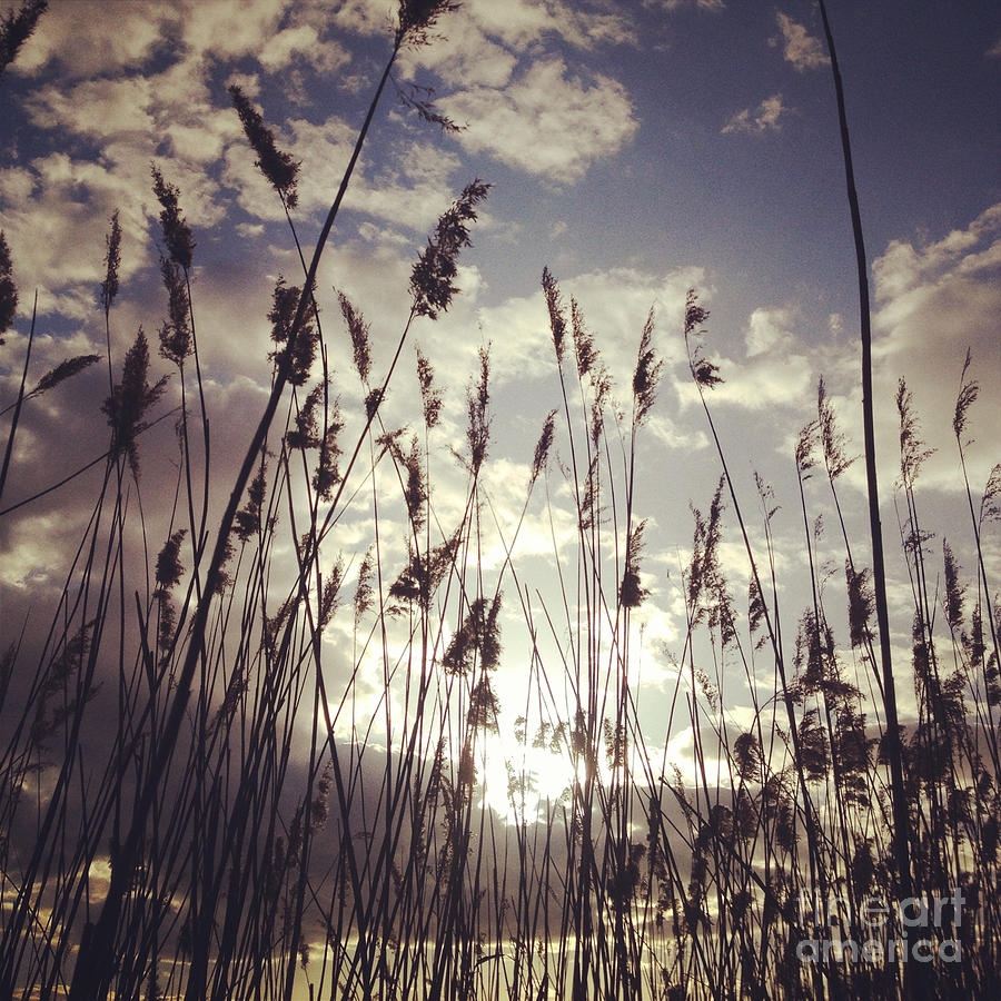 Sun Painting - Hidden by Claudia Newman