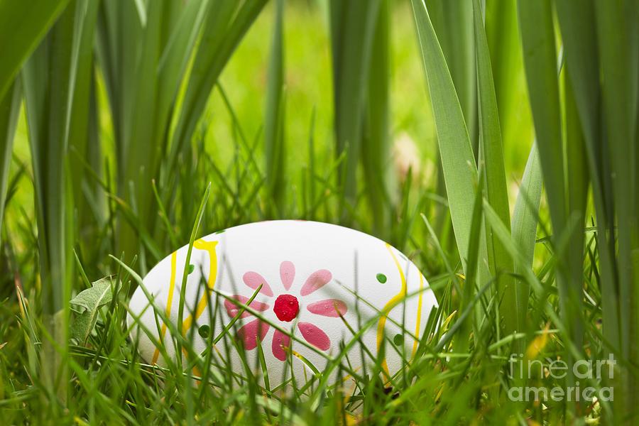 Hidden Easter Egg Photograph