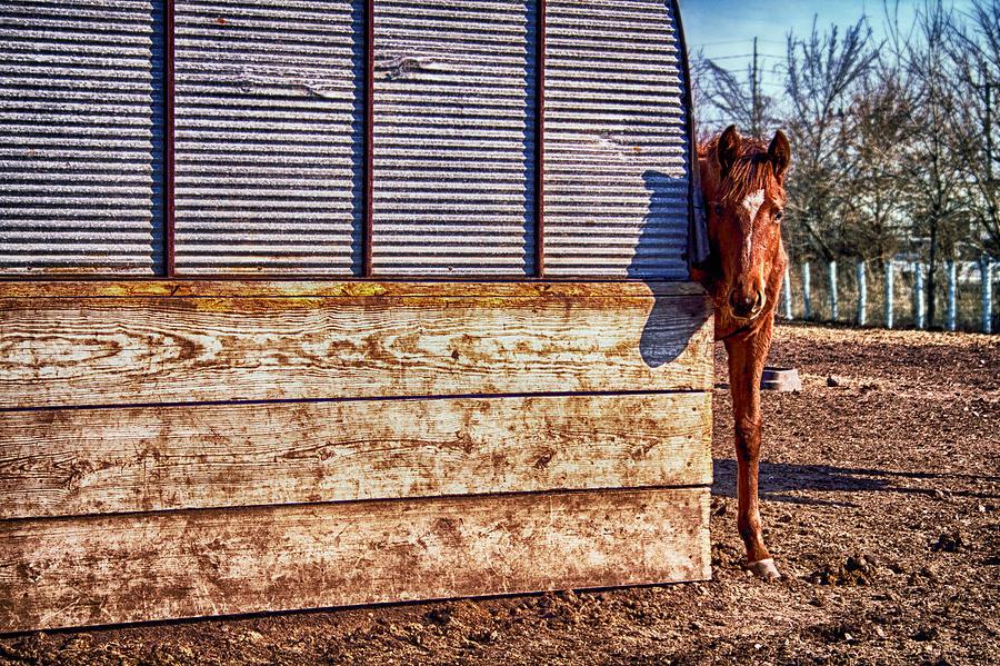 Horse Photograph - Hidden Horse by Ian Van Schepen