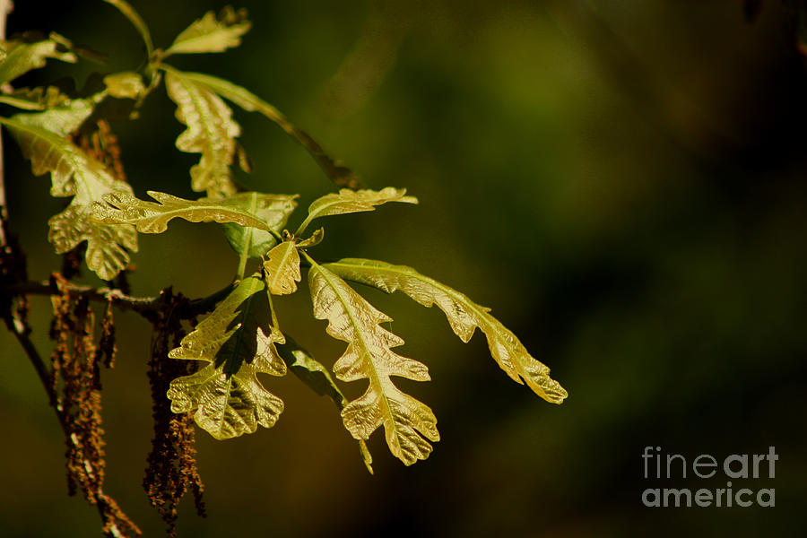 Leaf Photograph - Hidden Leaves With A Green Back Ground by Robert D  Brozek